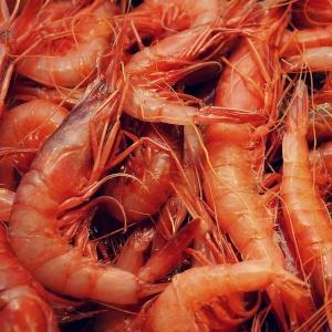Gambero viola - Blue and red shrimp